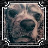 Hair of the Dog DVD by Bob Tyrrell